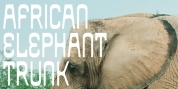 African Elephant Trunk font download