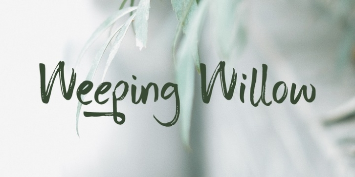 Weeping Willow font preview